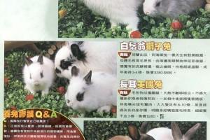壹週刊(636期〉 多多龍 - 兔兔訪問