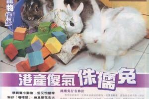3 週刊(134期〉 多多龍 - 兔兔訪問